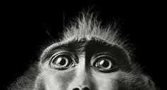 La natura animale 'More than Human' di Tim Flach