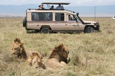safari_holiday_752672.jpg (1600×1066)