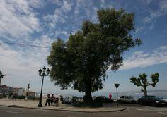 Tres jóvenes detenidos en Vigo por herir de gravedad a un hombre en plena calle | farodevigo.es
