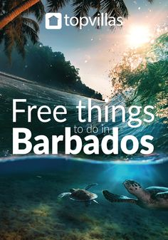 Although it's best known for year-round sunshine and glamorous, wave-lapped beaches, there's plenty more to discover on Barbados.