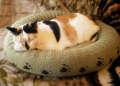 Make your pet happy with a cozy knit bed! Grab the pattern and take a look at more of our favorite pet-inspired projects by clicking >> http://j.mp/154necT  Be sure to enter for a chance to win an online Craftsy class of your choice during the #PetProjects contest! Add a picture of your pet-inspired project to the Craftsy Projects gallery and include #PetProjects in the title! On Sunday, we'll randomly select a winner! Click >> http://j.mp/16bJXAO