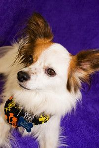 Pet Photography is so much fun! http://www.facebook.com/JB.Photography.Bethalto