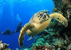 Scuba diving in the Galapagos.