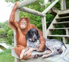 Amistad entre un orangután y un perro