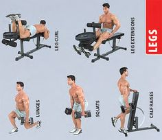 dumbbell-legs-exercises Lunges, Squats, Leg Raises, Best Diets, Barbell, Fat Burning, Muscle, Weight Loss, Gym