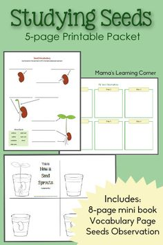 Free Studying Seeds Unit with Printable Mini-Book, Seed Chart, and Vocabulary Page | Free Homeschool Deals ©