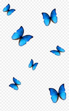 Transparent Background Butterfly Png For Editing Blue Butterfly Wallpaper, Butterfly Background, Butterfly Clip Art, Morpho Butterfly, Butterfly Photos, Desktop Background Pictures, Best Background Images, Iphone Background Wallpaper, Origami Rose
