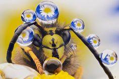 Une abeille sertie de perles d'eau