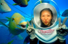 Gavin is the big fish on campus at the seawalker attraction at the Great Barrier Reef in Australia.