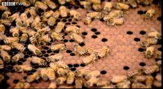 Documentary on why math and nature: why do bees make hexagonal comb?