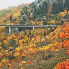 America's Best Road Trips Bayou Country, Blue Ridge Parkway, Largest Countries, Travel Bugs, Travel And Leisure, Asheville, Bucket Lists, Road Trips, Roads