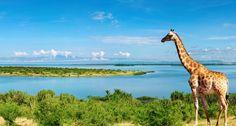 Beautiful African landscape with Nile River and giraffe; Nile River, Uganda