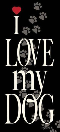 I love my Eddie a shih-Tzu jack Russell Terrier mix - Funny Dog I Love Dogs, Puppy Love, Cute Dogs, Jack Russell Terrier, Shih Tzu Hund, Shih Tzus, Animals And Pets, Cute Animals, Amor Animal