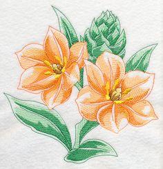 African Star Flower Beauty
