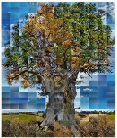 still film of an oak - noel myles [photographic collage]