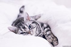 Kitty snuggled in bed   //   FOXINTHEPINE.COM