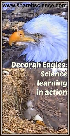 Share it! Science News : Decorah Eagles of the Raptor Resource Project Cont...