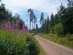 Waldweg nach Roggenbach /und Schlüchtsee