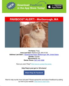 Lost Female Cat Named Peep: Marlborough, MA Female Cat, Cat Names, Have You Seen, Lost & Found, Cat Lady, Peeps, Cats, Gatos, Cat