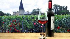 Il respiro del vino, di Luigi Moio - Cronache Letterarie Merlot Wine, Red Wine, Sauvignon Blanc, Cabernet Sauvignon, Chateau Margaux Wine, Bordeaux Wine Tours, French Wine Regions, Wine Club Monthly, Types Of Wine