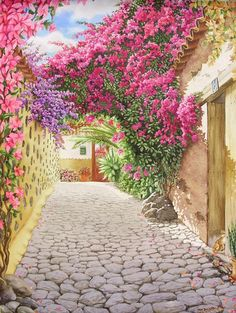 #streetart Calle con Buganvilla-con Gato - Robert C. Murray II. Pretty flowers and plants adorn a cobblestone path down a city lane.