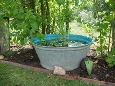 Mini effort for the mini pond - Modern Small City Garden, Small Gardens, Mini Pond, Effort, Kitchen Ornaments, Diy Bird Bath, Small Hallways, Plant Health, Diy Garden Decor