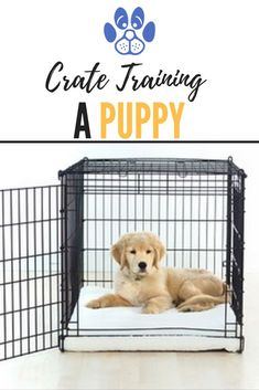 Everything you need to know about crate training a puppy from best practices to adult dog sizes to in-crate dog behavior to best crates to use and why. Crate Training, Dog Training Tips, Banana Face Mask, Furry Tails, Face Mapping, Dog Barking, Dog Behavior, New Puppy, Doge