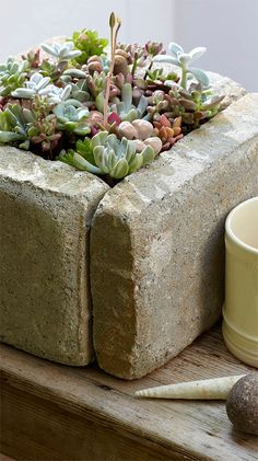 Love this DIY stone planter!     Excerpted from Bring the Outdoors In: 20 Garden Projects for the Decorating and Styling Interiors by Shane Powers. Excerpted with permission from Chronicle Books.