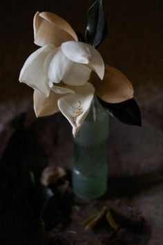 MAGNOLIA  Meaning: Love of nature  Best For: Arrangements  Scent: Depends on variety  In Season: Spring and summer  Price Range: Expensive  Floral Fact: Magnolias are more common in Southern-style weddings, as most magnolia trees grow in the South.