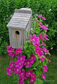 Beautiful clematis surrounding a birdhouse