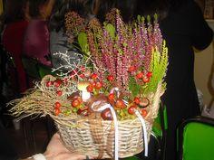 Florasis Jezbořice