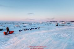 Jeff King leads Ralph Johannessen on the sea ice at dawn leaving the Koyuk checkpoint on Monday March 14th during the 2016 Iditarod.  Alaska    Photo by Jeff Schultz (C) 2016  ALL RIGHTS RESERVED: Jeff King leads Ralph Johannessen on the sea ice at dawn leaving the Koyuk checkpoint on Monday March 14th during the 2016 Iditarod.  Alaska    Photo by Jeff Schultz (C) 2016  ALL RIGHTS RESERVED