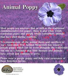 Lest We Forget. The animals who served beside our men.