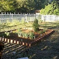 This is a fence I made for my garden using pallets and old pickets fro…