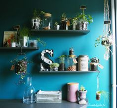 Idées déco : étagères végétales Decoration, Floating Shelves, Sweet, Home Decor, Diy Room Decor, Decor, Candy, Wall Mounted Shelves, Decorating