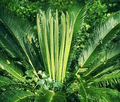 Common Deadly Toxin: Sago Palm     Dogs, cats, and horses find Sago Palms delicious. The entire plant is toxic but the seeds have the highest concentration of toxin and are, unlike the spiked fronds, easy to ingest. In fact, some veterinarians think that dogs are particularly drawn to these deadly treats. Often, Sago Palms are the only plants in a yard full of greenery that a dog tries to eat.    The poison in these plants is so toxic that dogs have died after ingesting a single seed…