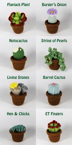 Realistic crocheted cacti and succulents Crochet Patterns Amigurumi, Crochet Dolls, Crochet Stitches, Crochet Cactus, Crochet Flowers, Crochet Home, Cute Crochet, Crochet Vintage, Cacti And Succulents
