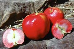 Red-fleshed Apple. Pink Pearmain.