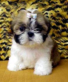 nala and libby need bows like this!