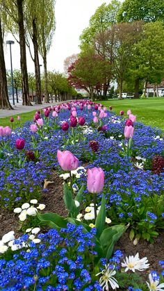 Lucerne, Tulips Wallpaper Nature Flowers, Beautiful Landscape Wallpaper, Beautiful Landscapes, Beautiful Gardens, Beautiful Good Night Images, Beautiful Nature Pictures, Beautiful Nature Scenes, Flower Garden Pictures, Flower Images