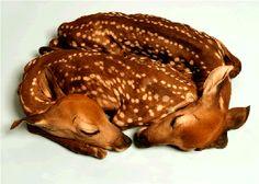 Twin Fawn Taxidermy, from Roadkill Doe Beautiful Creatures, Animals Beautiful, Beautiful Babies, Cute Baby Animals, Funny Animals, Lazy Animals, Animal Babies, Wild Animals, Oh Deer