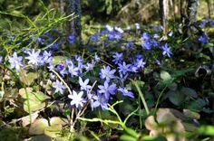 Suunnittelijan silmin My Photos, Nature, Plants, Naturaleza, Planters, Nature Illustration, Outdoors, Plant, Planting