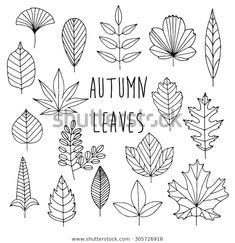 Find Hand Drawn Autumn Leaves Set stock images in HD and millions of other royalty-free stock photos, illustrations and vectors in the Shutterstock collection. Hand Drawn Cards, Hand Drawn Type, Hand Drawn Lettering, Fall Leaves Drawing, Leaf Drawing, Leaves Doodle, Doodle Trees, Autumn Doodles, Art Drawings For Kids