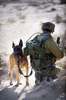 Dogs in warfare - Wikipedia, the free encyclopedia