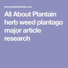All About Plantain herb weed plantago major article research
