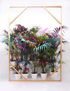 Ana Beltrá - Abstract Jungle
