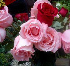 Miluji růže (81 pieces)