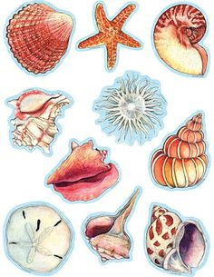 Animal images to trim You are in the right place about Sealife artwork Here we offer you the most beautiful pictures about the Sealife underwater you are looking for. When you examine the Animal image Shell Drawing, Beach Clipart, Sea Art, Illustration, Fish Art, Animals Images, Sea Creatures, Sea Shells, Watercolor Paintings