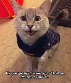 I love kitty sweaters. So cute!