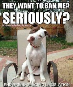 Seriously? God bless the Pit-bulls and Pit-mixes.  God forgive the mistaken and the uninformed.